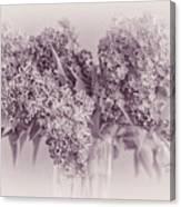 Romancing The Lilac Canvas Print