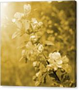 Romantic Blossoms With Bokeh Canvas Print