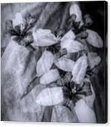 Romantic Island Iris In Black And White Canvas Print