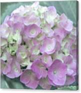 Romantic Pink Hydrangea Canvas Print