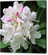 Romantic Rhododendron Canvas Print