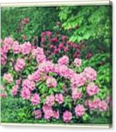 Romantic Rhododendrons Canvas Print