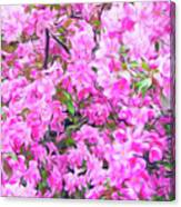 Romantic Skies Apple Blossoms  Canvas Print