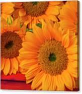 Romantic Sunflowers Canvas Print
