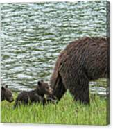 Romping By The Lake With Mama Bear Canvas Print