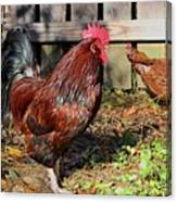 Rooster And Friend Canvas Print