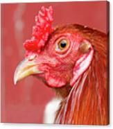 Rooster Close-up On A Reddish Background Canvas Print