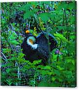Rooster Grouse Posing Canvas Print