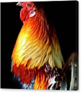Rooster Portrait Canvas Print