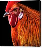 Rooster Pride Canvas Print