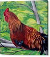 Roosting Canvas Print