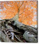 Root Of The Matter Canvas Print