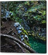 Rooted In Emerald  Canvas Print