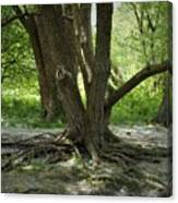Roots Above Canvas Print