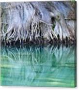 Roots Canvas Print