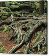Roots On The Forest Floor Canvas Print