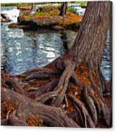 Roots On The River Canvas Print