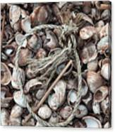 Rope In Shells Canvas Print