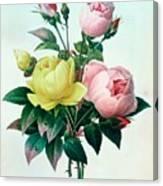 Rosa Lutea And Rosa Indica Canvas Print