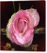 Rosa Rose Portrait Canvas Print