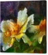Rosa Rubiginosa Canvas Print