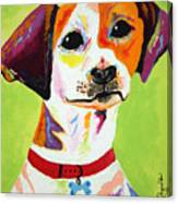Roscoe The Jack Russell Terrier Canvas Print