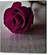 Rose #003 Canvas Print