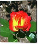 Rose 07 Canvas Print