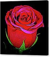 Rose 18-9 Canvas Print