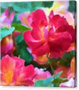 Rose 354 Canvas Print