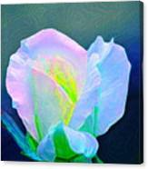 Rose 86 Canvas Print