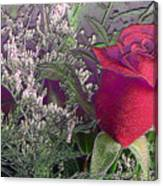 Rose And Babies Breath Canvas Print