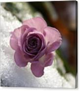 Rose And Snow Canvas Print