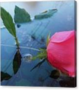 Rose And Water. Canvas Print