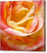 Rose Art Pink Yellow Summer Rose Floral Baslee Troutman Canvas Print