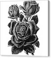 Rose Black Canvas Print