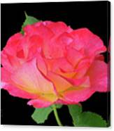 Rose Blushing Cutout Canvas Print