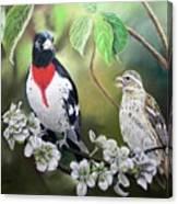 Rose Breasted Grosbeaks Canvas Print