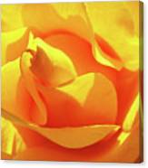 Rose Bright Orange Sunny Rose Flower Floral Baslee Troutman Canvas Print