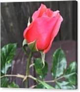 Rose Bud Canvas Print
