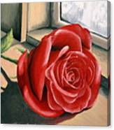 Rose By A Window Canvas Print