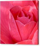 Rose Camellia Canvas Print
