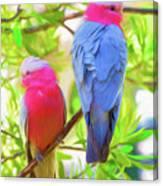 Rose cockatoos Canvas Print
