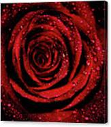Rose Dew Canvas Print