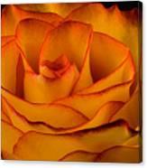 Rose Edge  Canvas Print