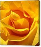 Rose Flower Orange Yellow Roses 1 Golden Sunlit Rose Baslee Troutman Canvas Print