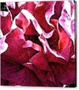 Rose Fresco Canvas Print