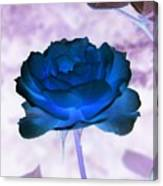 Rose In Full Bluem Canvas Print