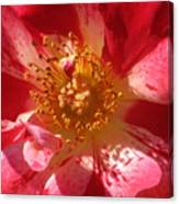 Rose In Pink Canvas Print