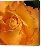 Rose In Ruffles Canvas Print